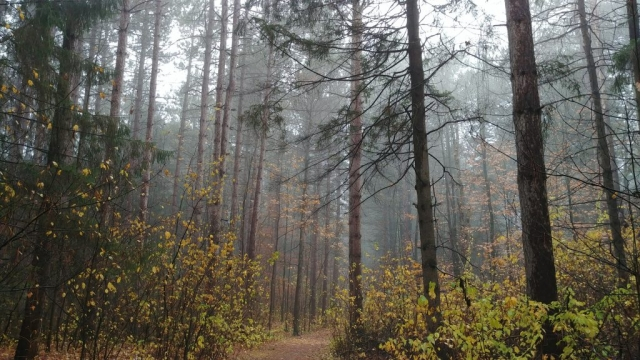 Pinhey Forest, Nepean Ontario
