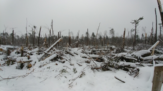 Bruce Pit, Nepean, Ontario, after the tornado and snow.