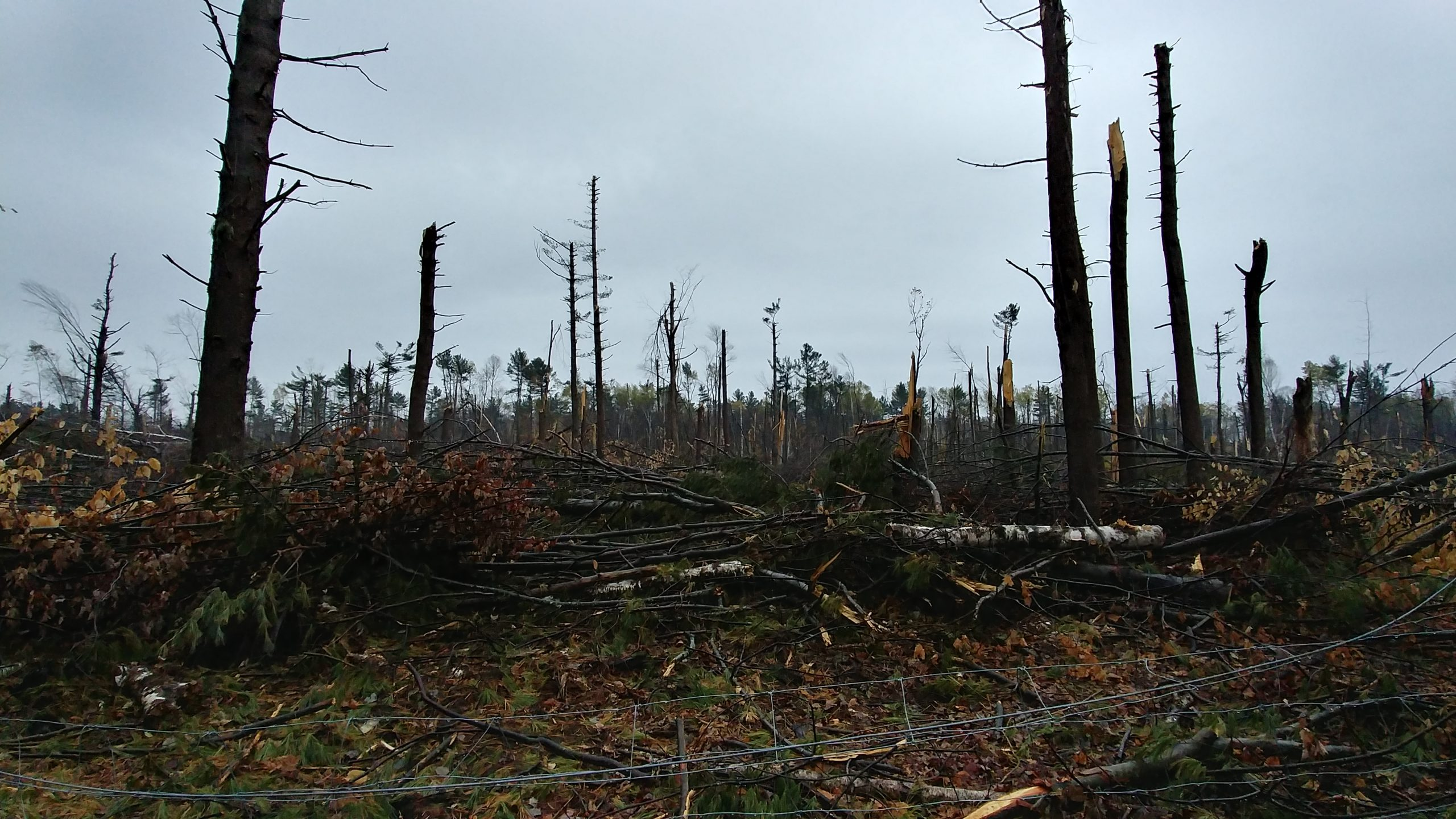 Bruce Pit after the tornado, Nepean, Ontario