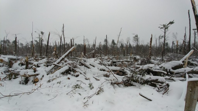 Bruce Pit after the tornado and snow, Nepean, Ontario