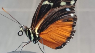 At the Museum of Nature in Ottawa