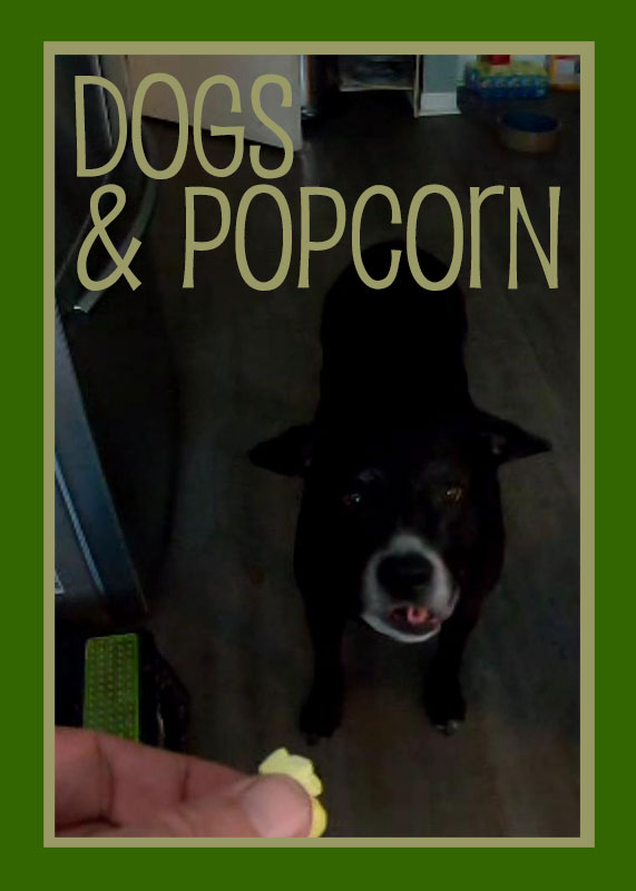 Dogs & Popcorn
