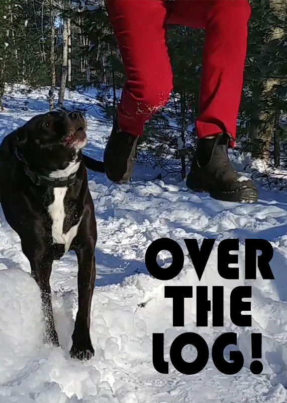 Over The Log 2019